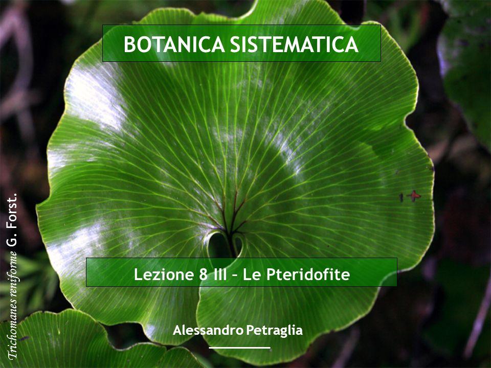 Pteridophyta Gli sporangi si sviluppano a partire da una cellula epidermica e sono protetti da una parete sottile che è costituita da un singolo strato di cellule Le felci appartenenti a questo gruppo sono piante per lo più sciafile diffuse in tutto il mondo con un gran numero di specie (circa 9000 specie, il 90% di tutte le Pteridopsida) Esse raggiungono il loro massimo sviluppo nelle regioni tropicali con unenorme ricchezza di forme Leptosporangiatae (=Pteriidae)