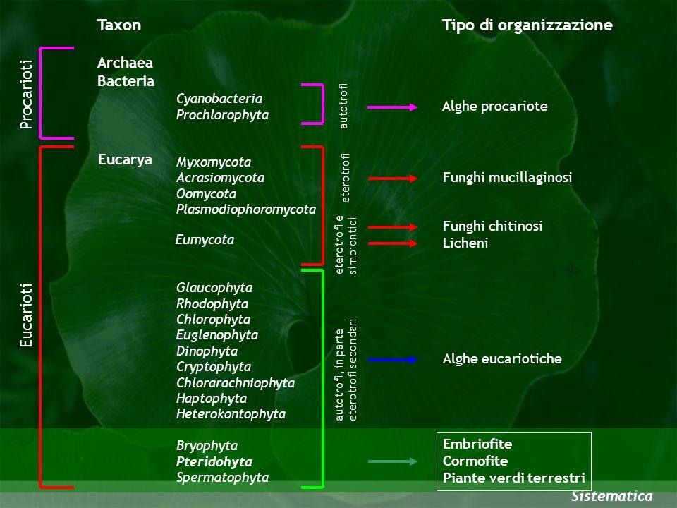 Sistematica Glaucophyta Rhodophyta Chlorophyta Euglenophyta Dinophyta Cryptophyta Chlorarachniophyta Haptophyta Heterokontophyta Bryophyta Pteridohyta