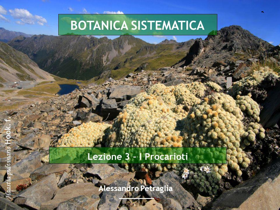 Lezione 3 – I Procarioti BOTANICA SISTEMATICA Alessandro Petraglia Haastia pulvinaris Hook. f.