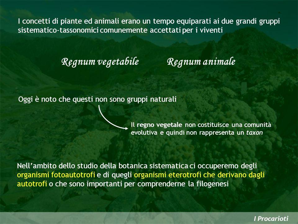 I Procarioti I concetti di piante ed animali erano un tempo equiparati ai due grandi gruppi sistematico-tassonomici comunemente accettati per i vivent