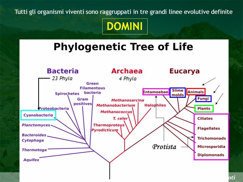 I Procarioti Tutti gli organismi viventi sono raggruppati in tre grandi linee evolutive definite DOMINI 4 Phyla Protista 23 Phyla
