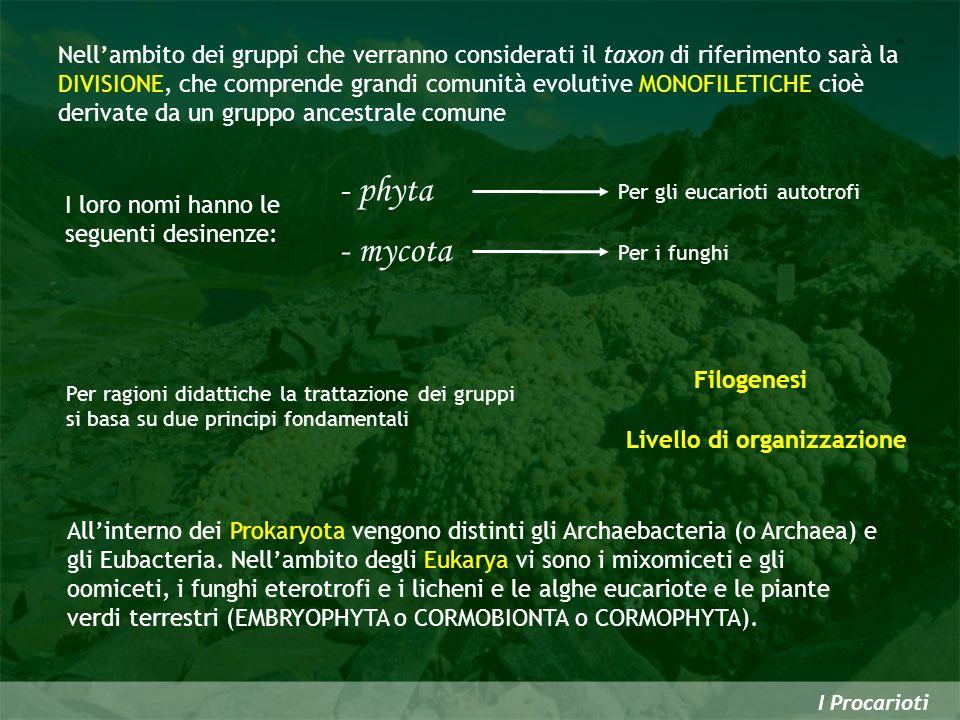 I Procarioti Nellambito dei gruppi che verranno considerati il taxon di riferimento sarà la DIVISIONE, che comprende grandi comunità evolutive MONOFIL