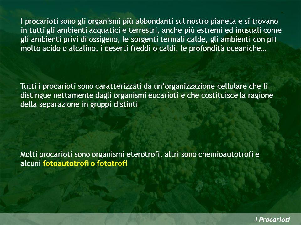 I procarioti sono gli organismi più abbondanti sul nostro pianeta e si trovano in tutti gli ambienti acquatici e terrestri, anche più estremi ed inusu