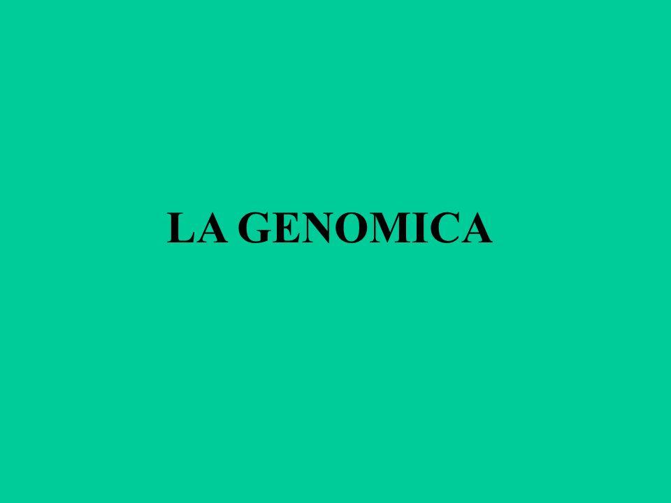 GENOMICA La genomica è una branca della biologia molecolare che si occupa dello studio del genoma degli organismi viventi.