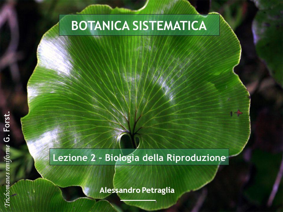 Lezione 2 – Biologia della Riproduzione BOTANICA SISTEMATICA Alessandro Petraglia Trichomanes reniforme G. Forst.