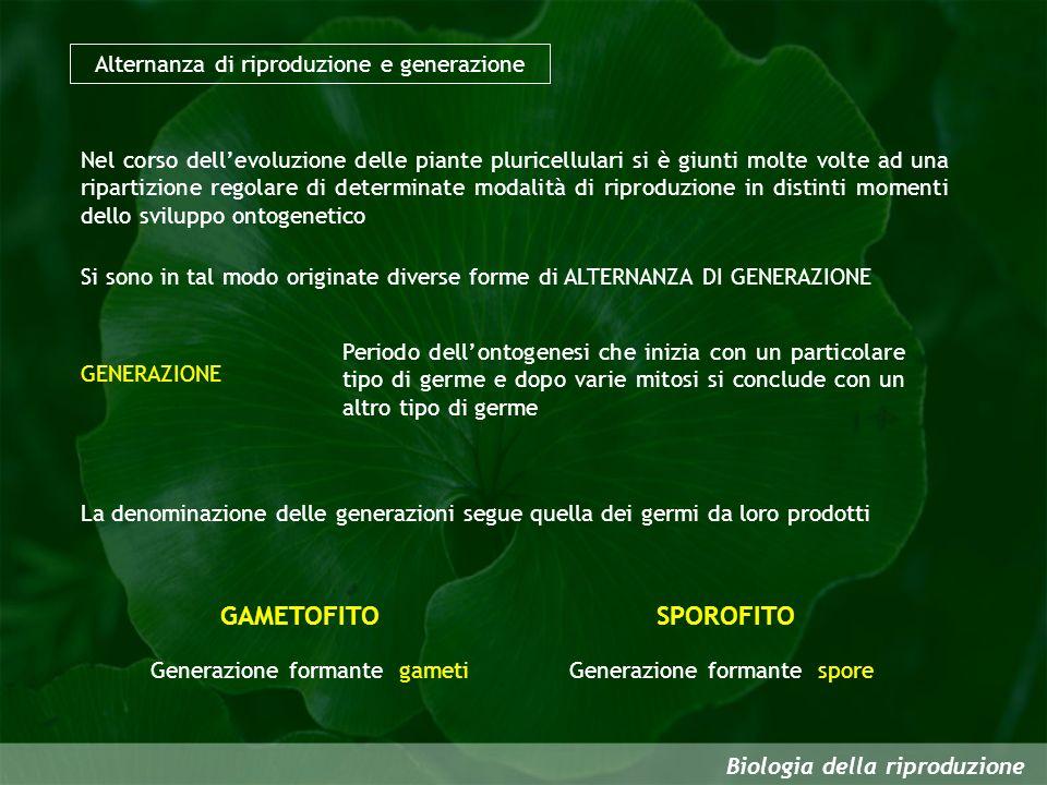 Biologia della riproduzione Alternanza di riproduzione e generazione Nel corso dellevoluzione delle piante pluricellulari si è giunti molte volte ad u