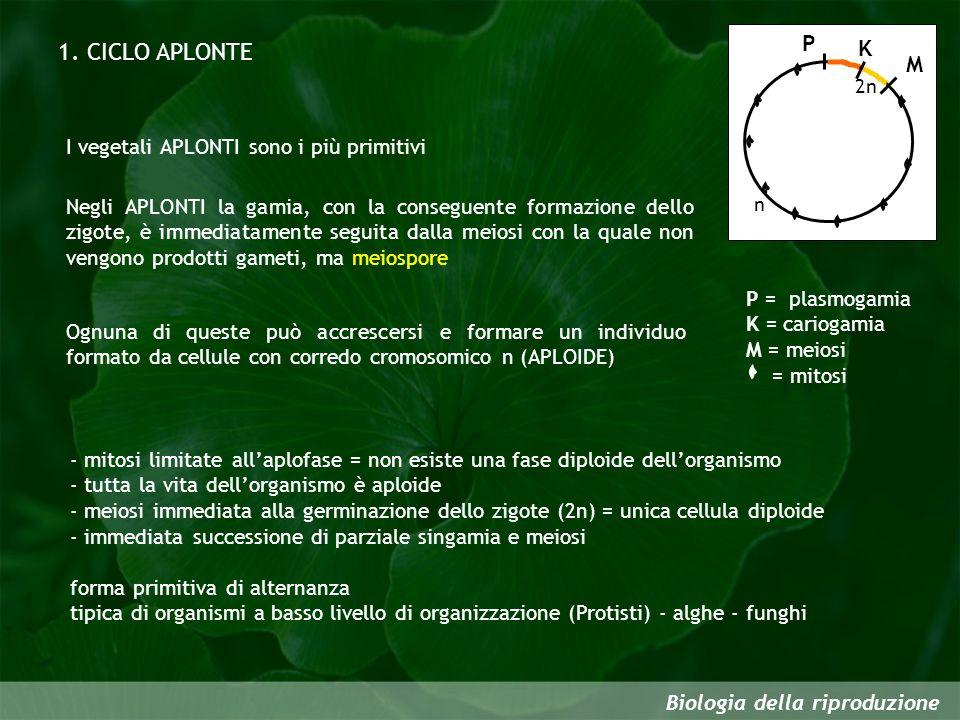 Biologia della riproduzione 1. CICLO APLONTE I vegetali APLONTI sono i più primitivi Negli APLONTI la gamia, con la conseguente formazione dello zigot