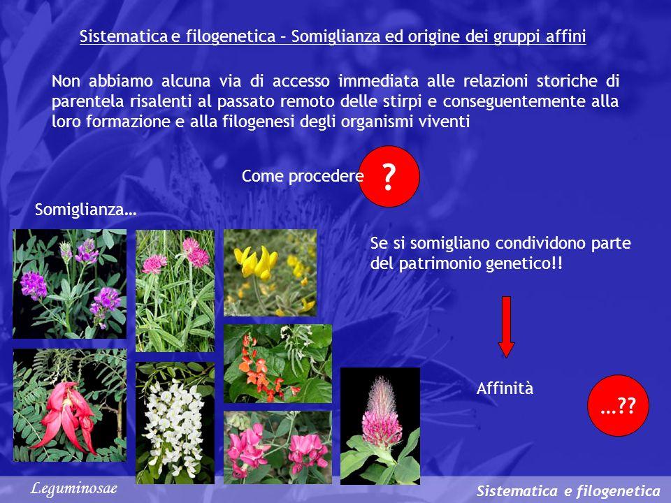 …?? ? Sistematica e filogenetica – Somiglianza ed origine dei gruppi affini Sistematica e filogenetica Non abbiamo alcuna via di accesso immediata all