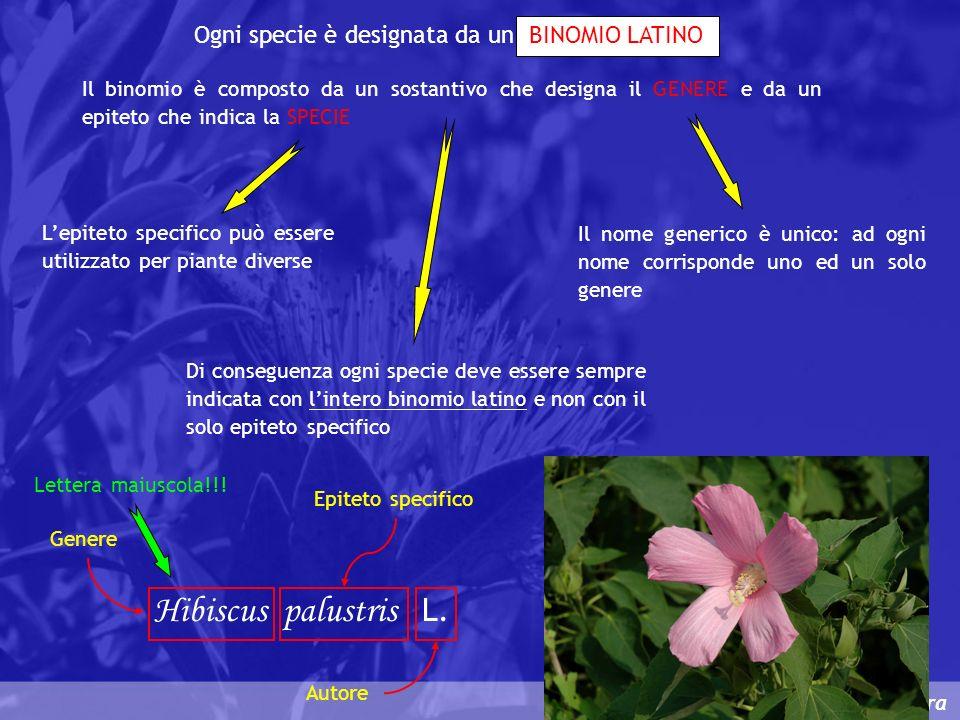 Classificazione e nomenclatura Ogni specie è designata da un BINOMIO LATINO Il binomio è composto da un sostantivo che designa il GENERE e da un epite