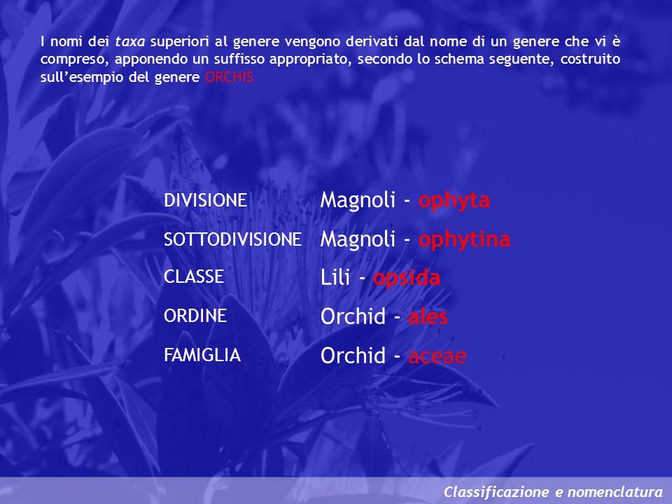 Classificazione e nomenclatura DIVISIONE CLASSE ORDINE FAMIGLIA Magnoli - ophyta Lili - opsida Orchid - ales Orchid - aceae SOTTODIVISIONE Magnoli - o