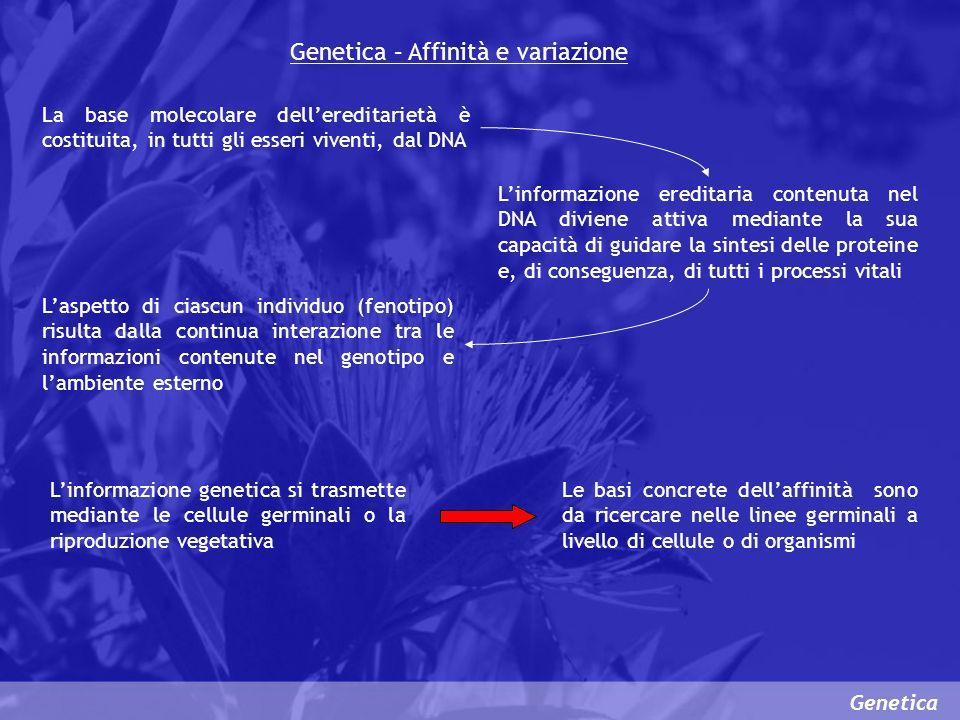 Genetica – Affinità e variazione Genetica La base molecolare dellereditarietà è costituita, in tutti gli esseri viventi, dal DNA Linformazione eredita