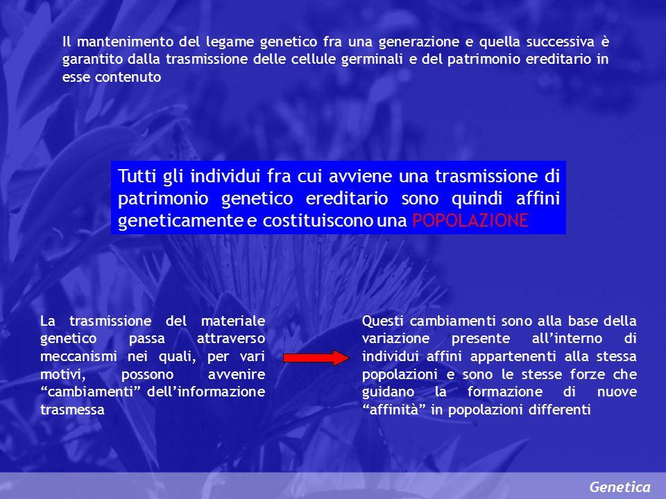 Genetica Il mantenimento del legame genetico fra una generazione e quella successiva è garantito dalla trasmissione delle cellule germinali e del patr