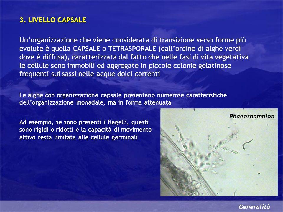 Generalità Organuli cellulari peculiari delle alghe Alcuni organuli cellulari si rinvengono solo nella cellula algale VACUOLI CONTRATTILI MACCHIA OCULARE o STIGMA PIRENOIDE VACUOLI CONTRATTILI Molte specie unicellulari dacqua dolce prive di pareti rigide, vivendo in un ambiente IPOTONICO rispetto al loro citoplasma, devono espellere in continuazione lacqua in eccesso che penetra per osmosi nelle cellule Lorganulo adibito alla osmoregolazione è il VACUOLO CONTRATTILE Questo organulo, che si forma per fusione di piccole vescicole, si riempie dacqua che scarica allesterno dopo essersi fuso con la membrana plasmatica Dopo lo svuotamento i residui della membrana vacuolare vengono riciclati per la formazione di nuove vescicole