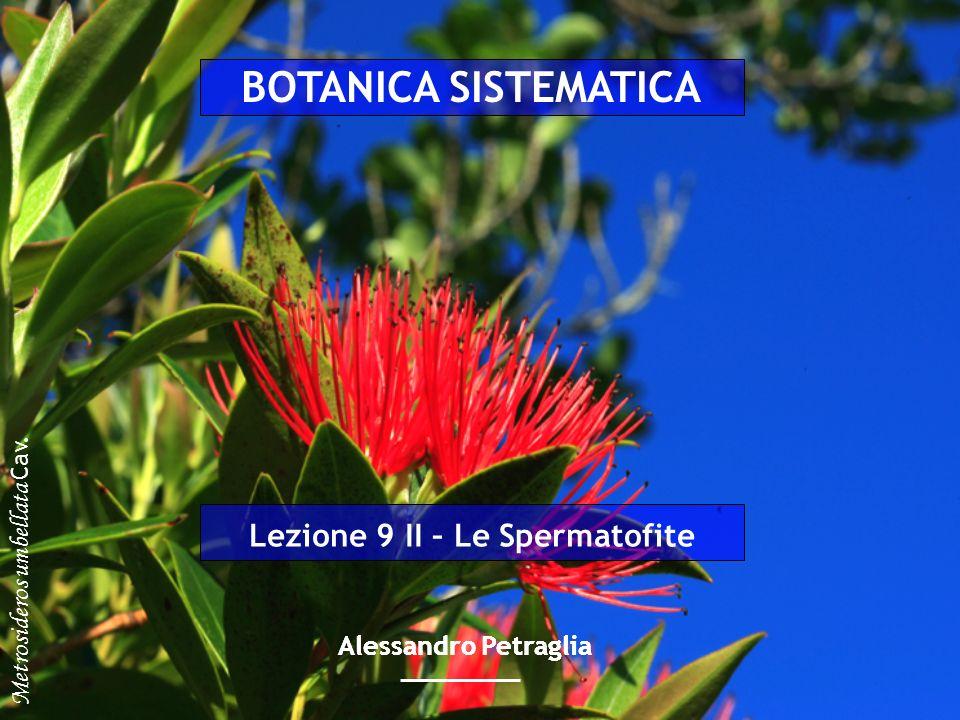 Alessandro Petraglia Lezione 9 II – Le Spermatofite Metrosideros umbellata Cav. BOTANICA SISTEMATICA Alessandro Petraglia