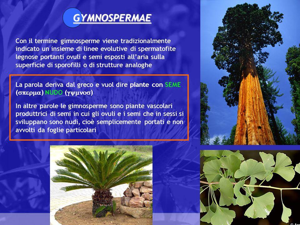 Gymnospermae GYMNOSPERMAE Con il termine gimnosperme viene tradizionalmente indicato un insieme di linee evolutive di spermatofite legnose portanti ov