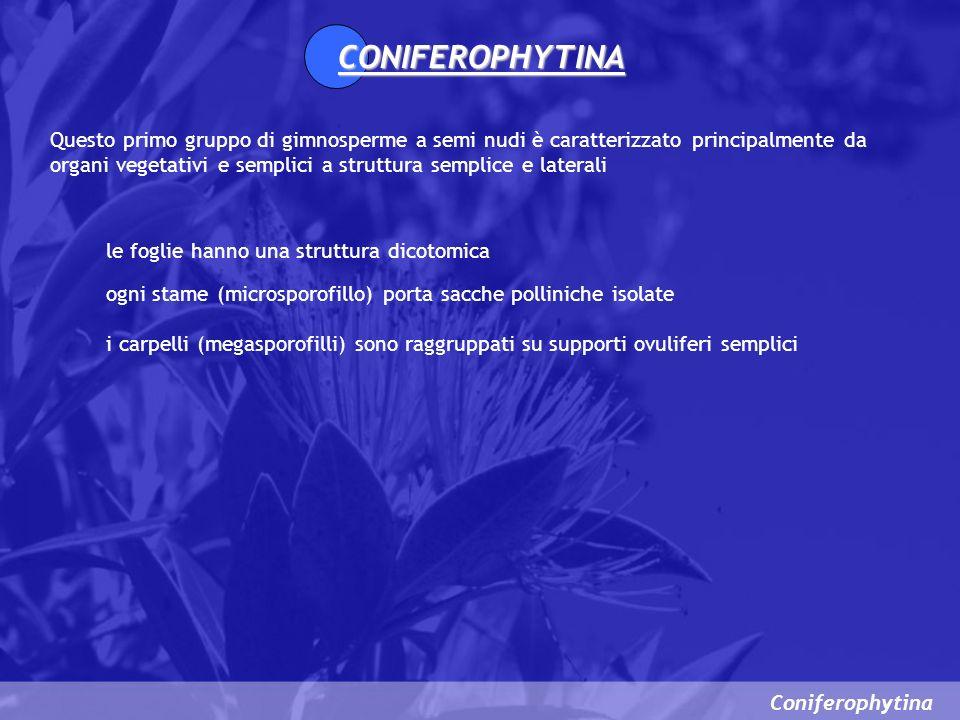 Coniferophytina Ciclo vitale 1.