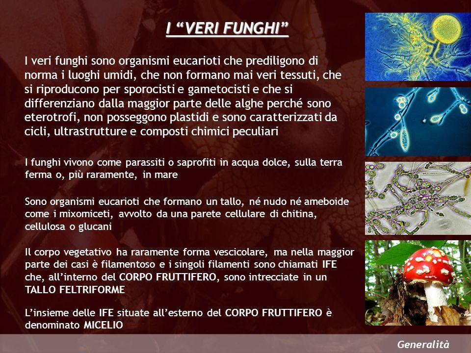 Generalità I VERI FUNGHI I veri funghi sono organismi eucarioti che prediligono di norma i luoghi umidi, che non formano mai veri tessuti, che si ripr
