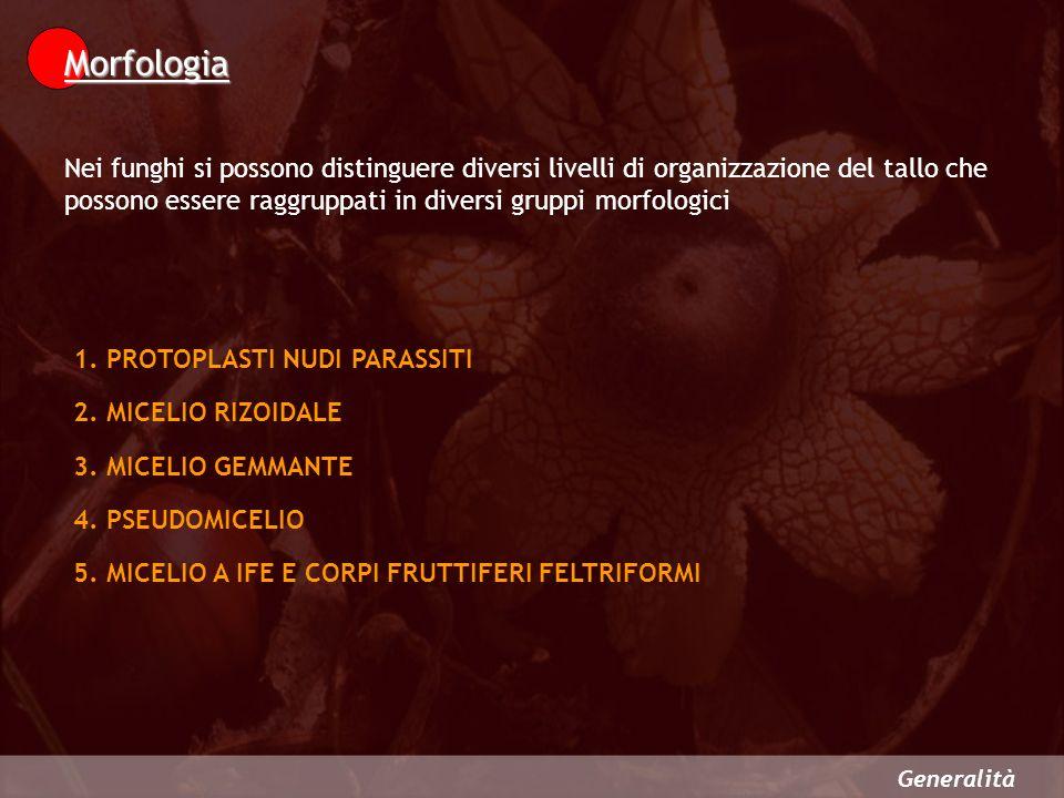 Generalità 1.PROTOPLASTI NUDI PARASSITI 2.