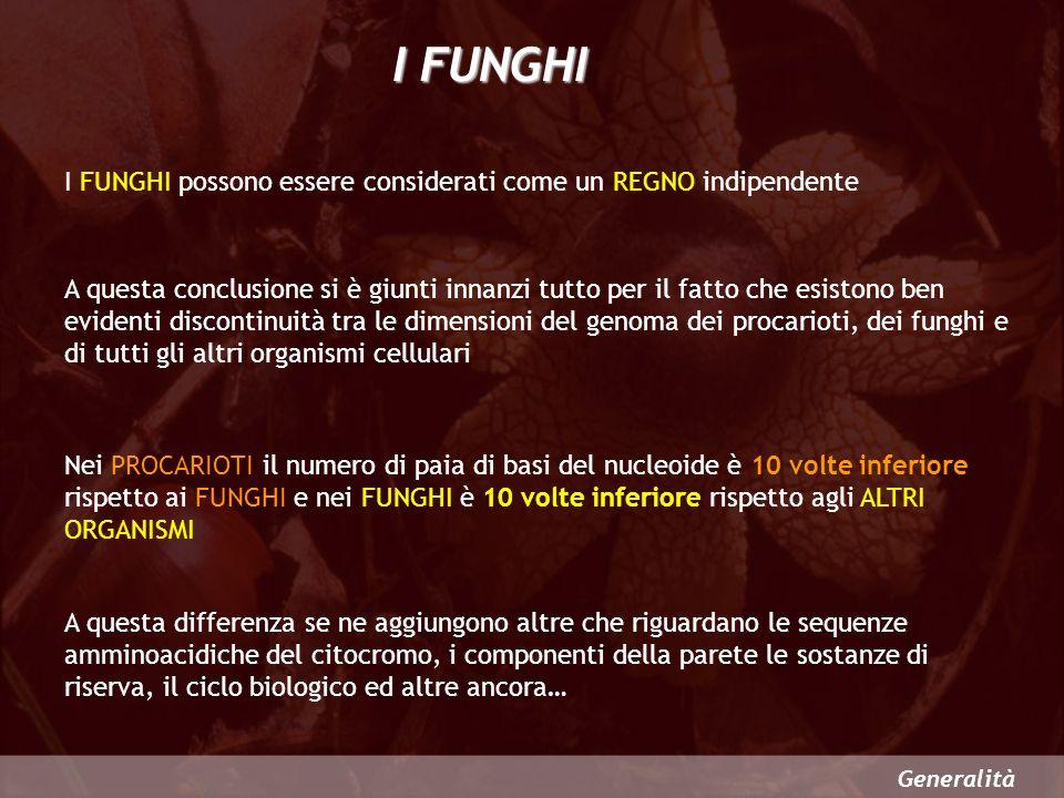 I FUNGHI possono essere considerati come un REGNO indipendente Generalità I FUNGHI A questa conclusione si è giunti innanzi tutto per il fatto che esi