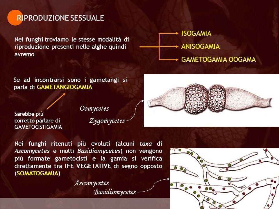 Generalità RIPRODUZIONE SESSUALE Nei funghi troviamo le stesse modalità di riproduzione presenti nelle alghe quindi avremo Biologia della riproduzione