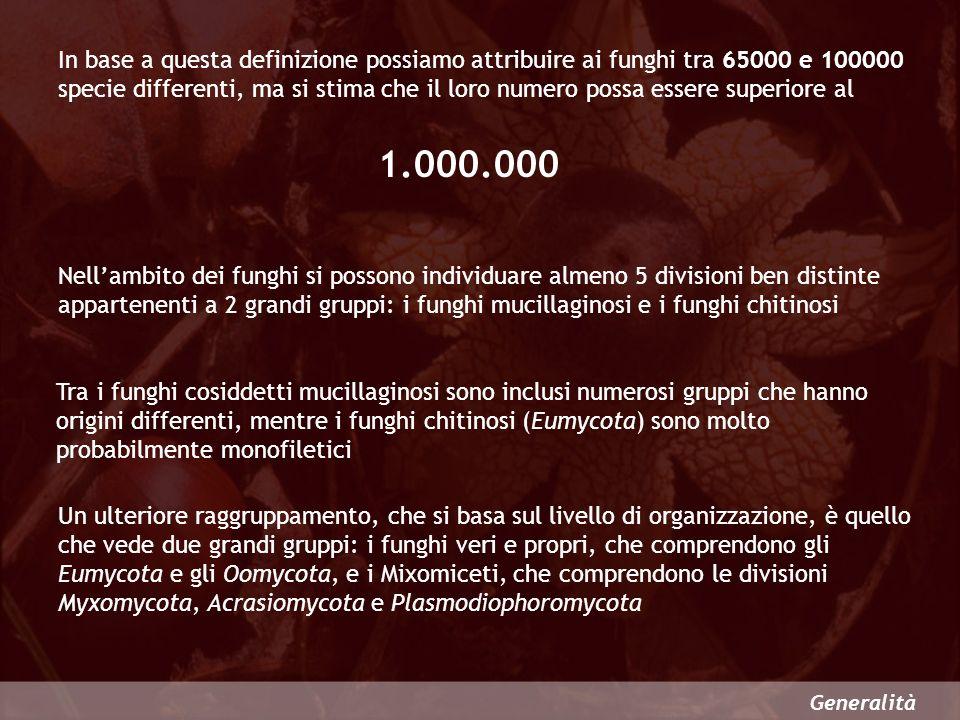 In base a questa definizione possiamo attribuire ai funghi tra 65000 e 100000 specie differenti, ma si stima che il loro numero possa essere superiore