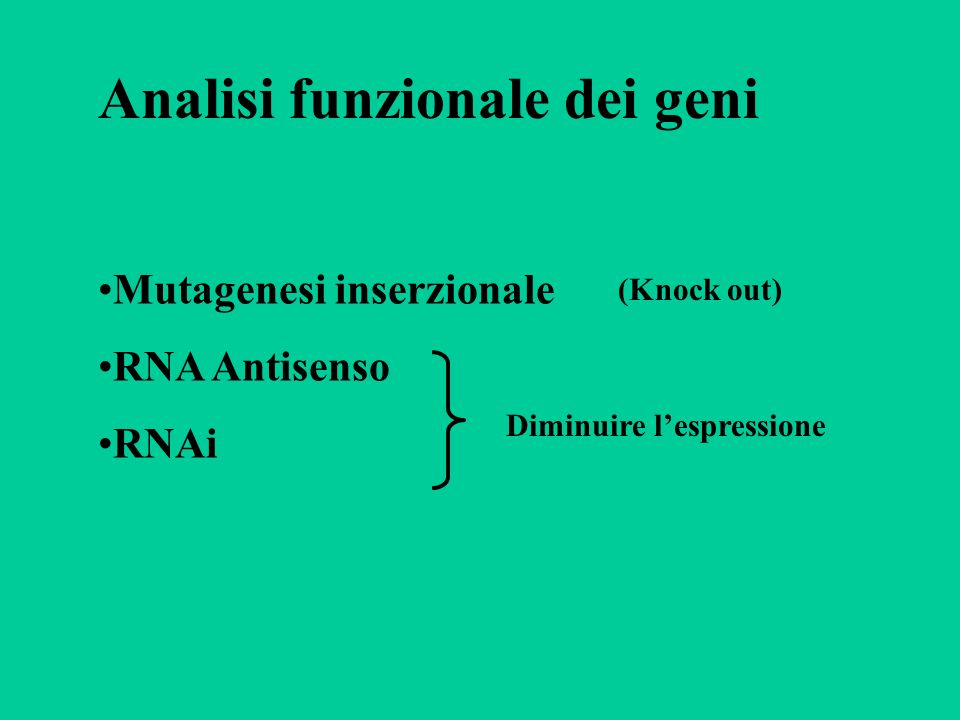 Analisi funzionale dei geni Mutagenesi inserzionale RNA Antisenso RNAi Diminuire lespressione (Knock out)