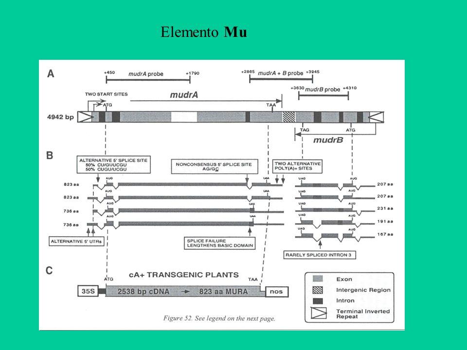 Elemento Mu
