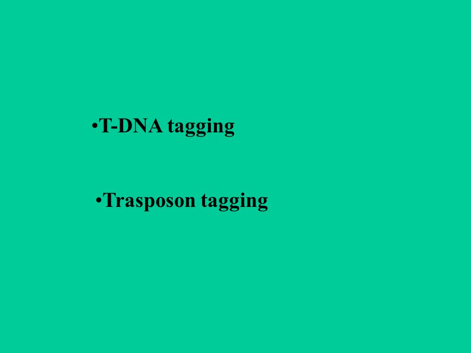 T-DNA tagging Trasposon tagging