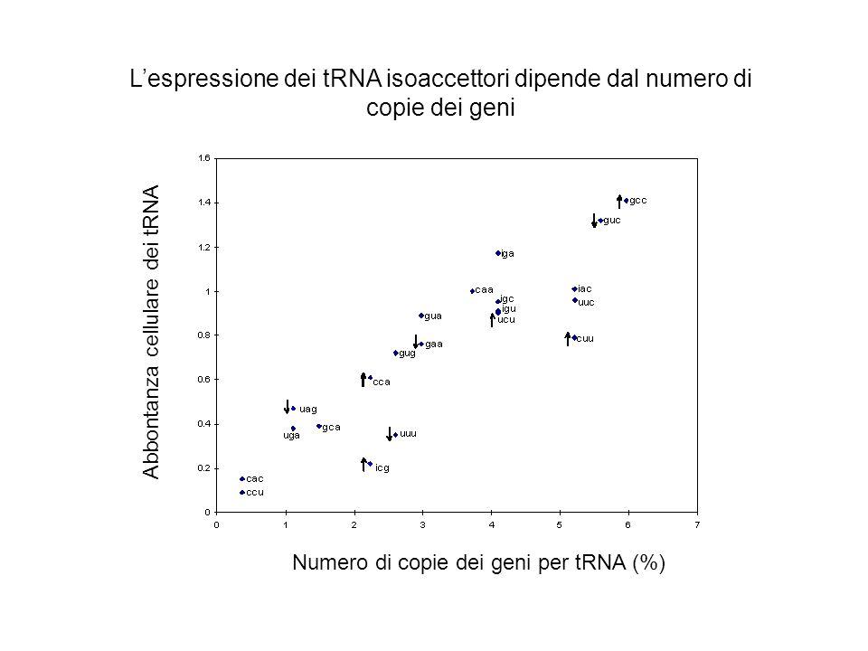 Livelli di regolazione dellespressione genica Genoma Organizzazione del genoma Accesso al genoma Trascrizione Maturazione dellRNA Sintesi proteica Degradazione dellRNA