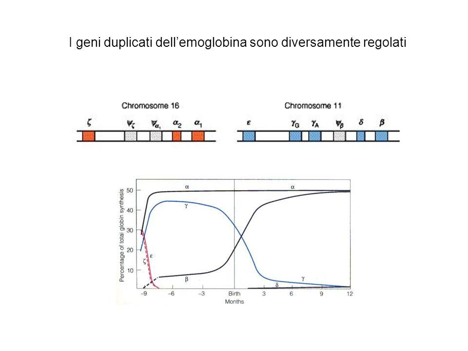 Espressione genica Levoluzione modifica lorganizzazione dei genomi e lespressione dei geni.