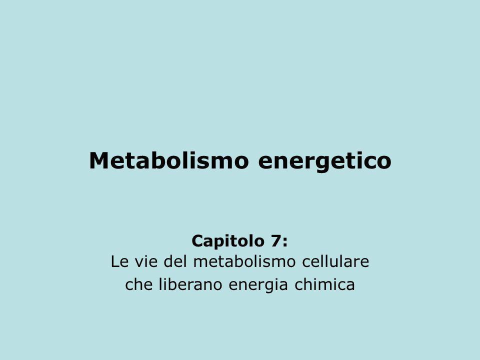 Metabolismo energetico Capitolo 7: Le vie del metabolismo cellulare che liberano energia chimica