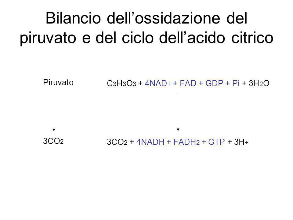 Bilancio dellossidazione del piruvato e del ciclo dellacido citrico C 3 H 3 O 3 + 4NAD + + FAD + GDP + Pi + 3H 2 O 3CO 2 + 4NADH + FADH 2 + GTP + 3H +