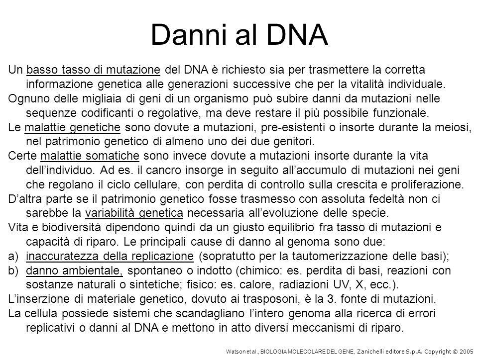 Watson et al., BIOLOGIA MOLECOLARE DEL GENE, Zanichelli editore S.p.A. Copyright © 2005 Danni al DNA Un basso tasso di mutazione del DNA è richiesto s