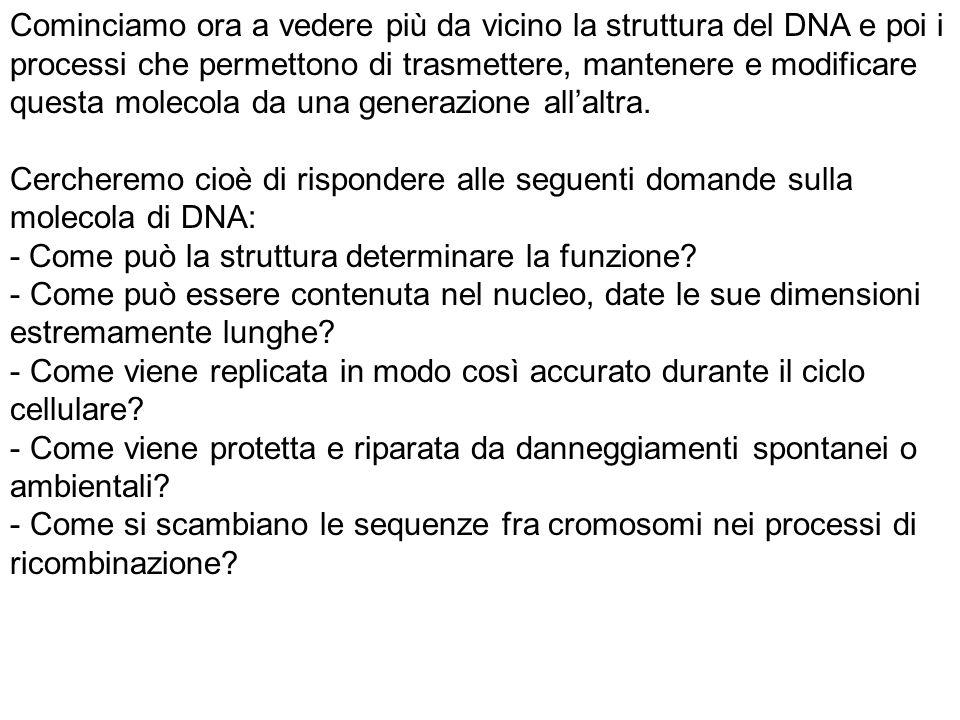 Il DNA è una molecola flessibile, la cui struttura (e dinamica) dipende molto dalla forza ionica e dalla natura delle proteine con cui interagisce.
