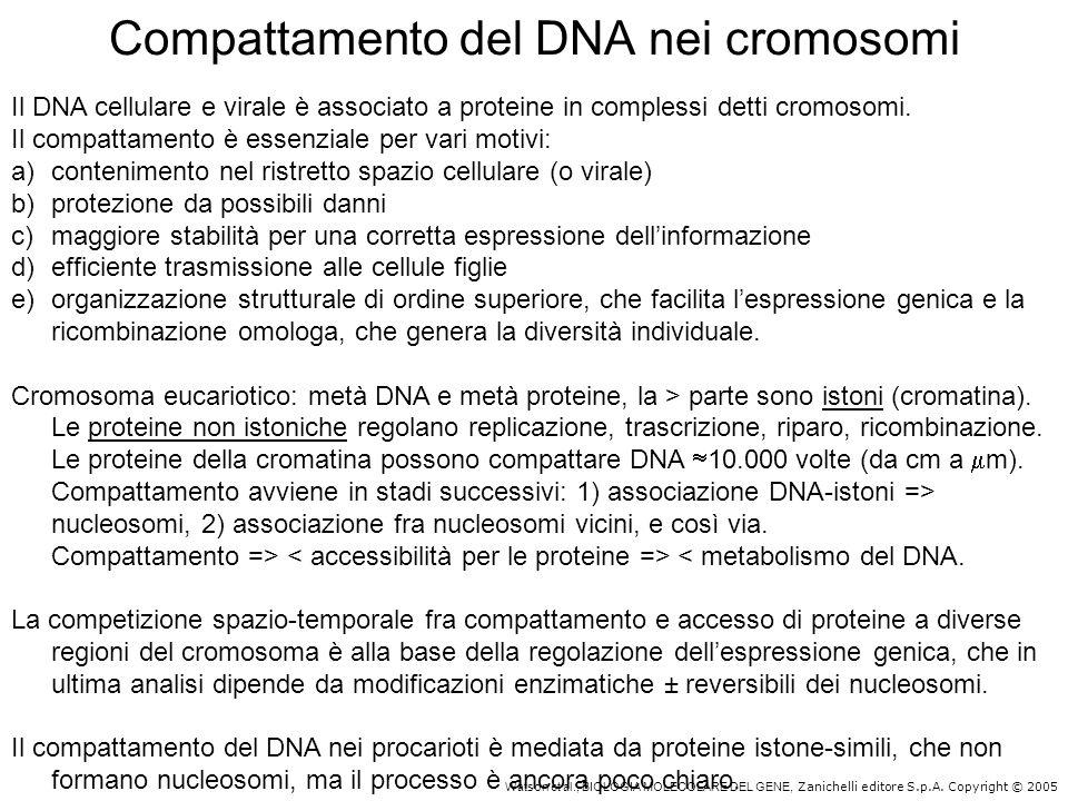 Watson et al., BIOLOGIA MOLECOLARE DEL GENE, Zanichelli editore S.p.A. Copyright © 2005 Compattamento del DNA nei cromosomi Il DNA cellulare e virale