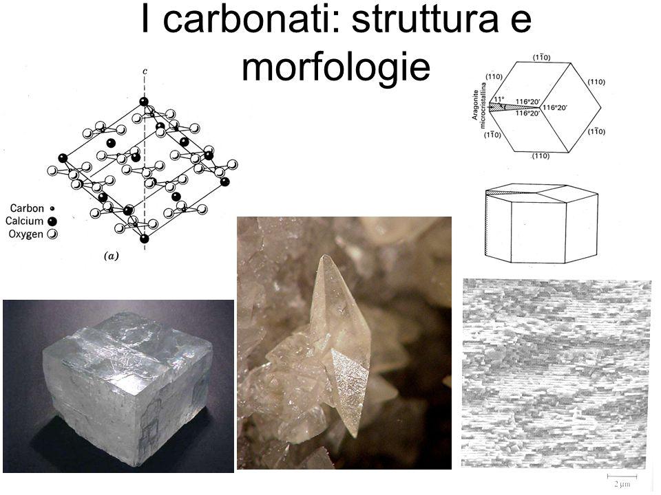I carbonati: struttura e morfologie
