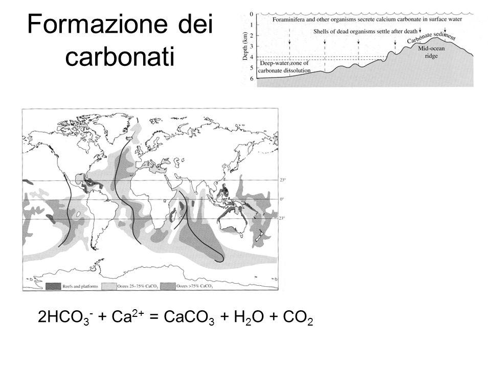 Formazione dei carbonati 2HCO 3 - + Ca 2+ = CaCO 3 + H 2 O + CO 2