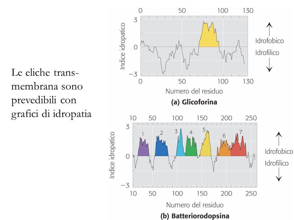 Le eliche trans- membrana sono prevedibili con grafici di idropatia