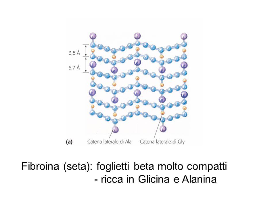 Fibroina (seta): foglietti beta molto compatti - ricca in Glicina e Alanina