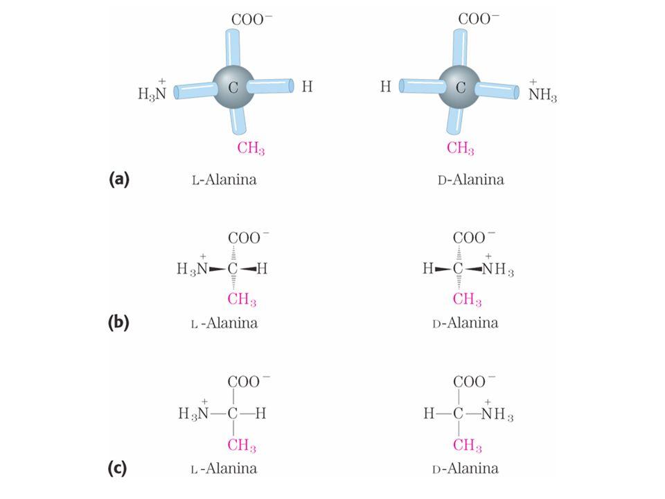 Funzioni delle proteine di membrana Trasporto Ricezione e trasmissione di segnali Produzione di energia Reazioni enzimatiche
