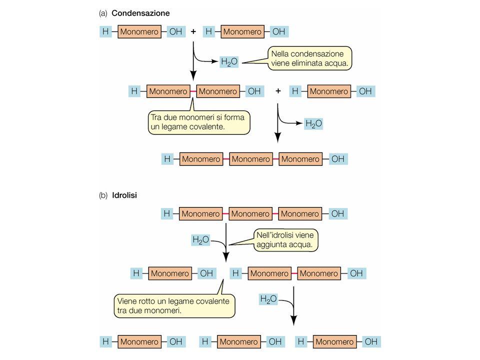 Alterazione permanente della cheratina HS- -S S- -SH HS- -SH HS- -S -SH riduzione piega ossidazione S- HS- S- HS-