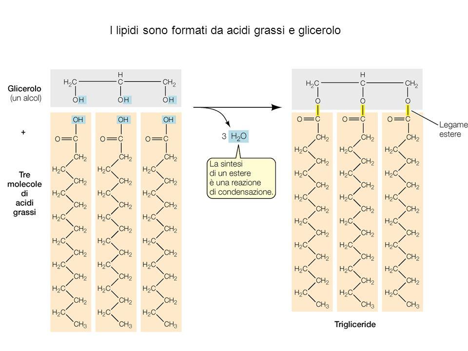 Trasporto di molecole attraverso la membrana