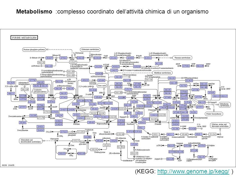 Metabolismo :complesso coordinato dellattività chimica di un organismo (KEGG: http://www.genome.jp/kegg/ )http://www.genome.jp/kegg/