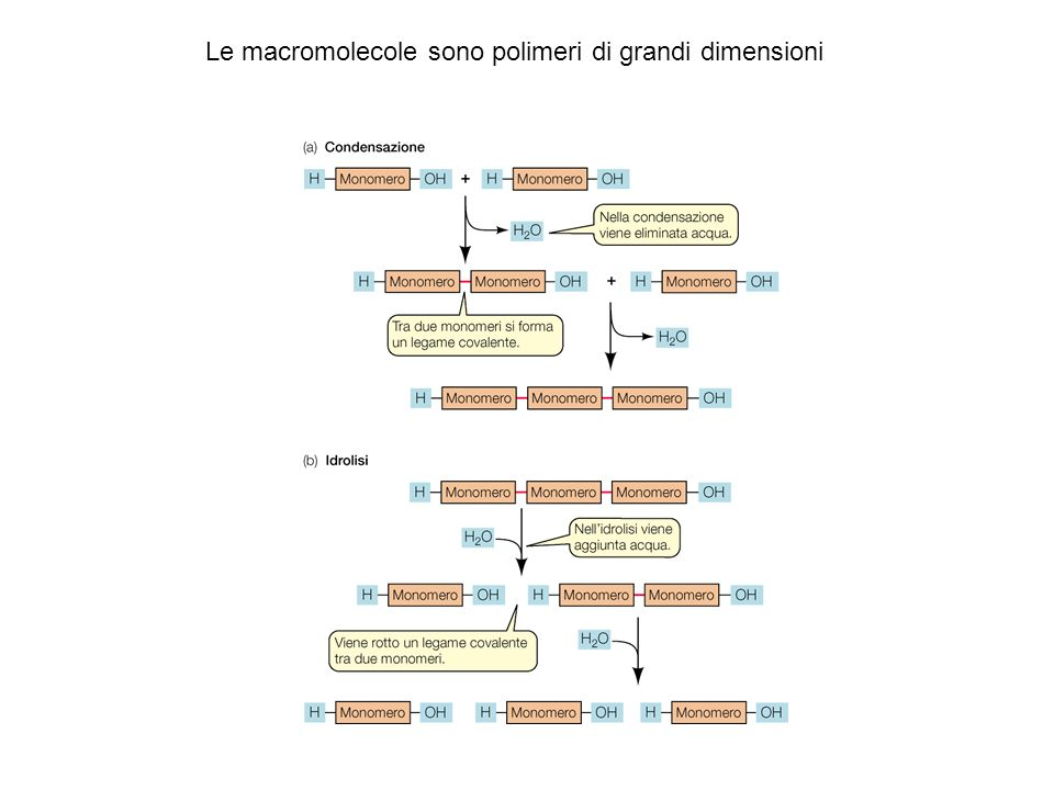 Le macromolecole sono polimeri di grandi dimensioni