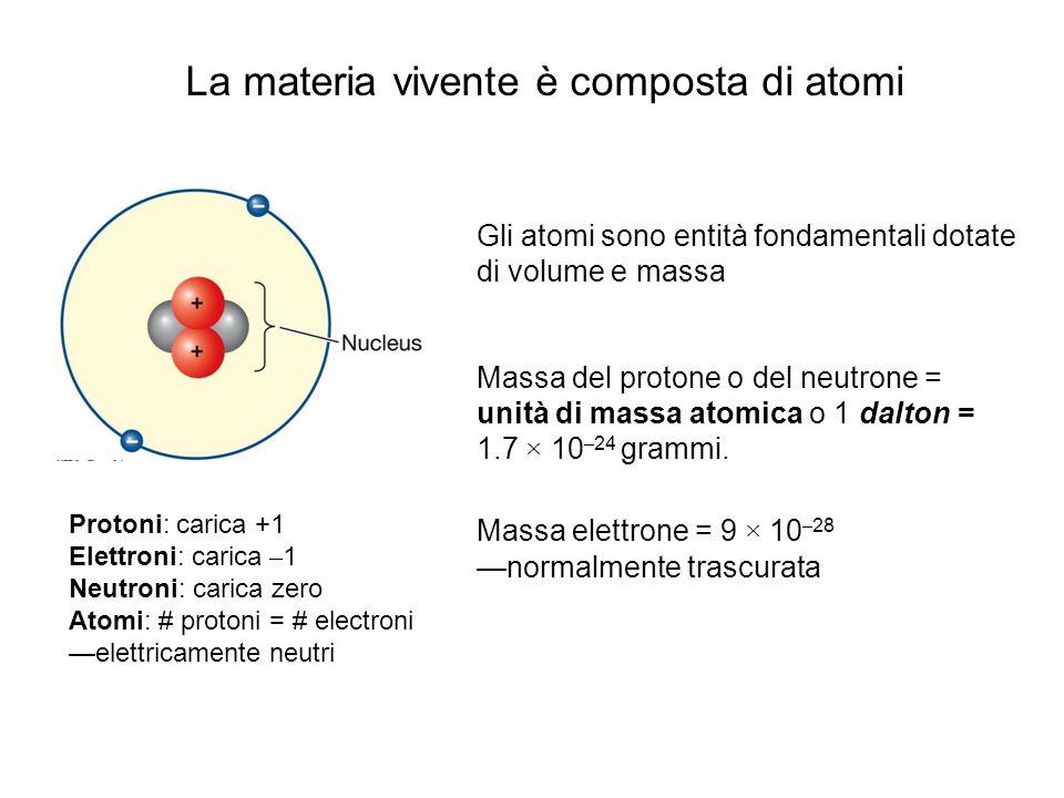 La materia vivente è composta di atomi Gli atomi sono entità fondamentali dotate di volume e massa Massa del protone o del neutrone = unità di massa a