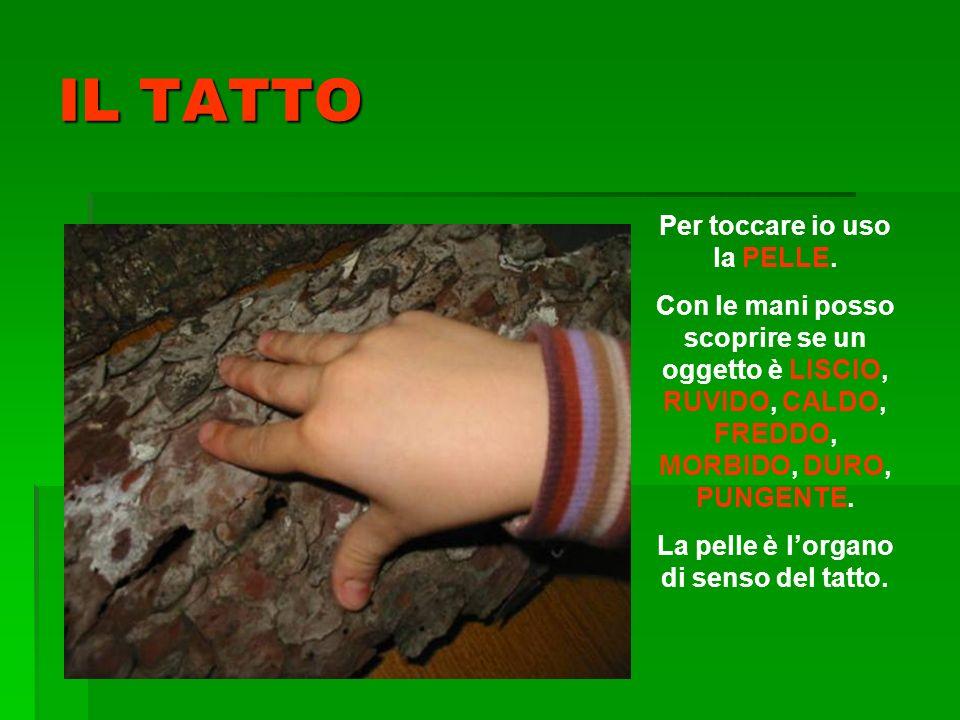 IL TATTO Per toccare io uso la PELLE. Con le mani posso scoprire se un oggetto è LISCIO, RUVIDO, CALDO, FREDDO, MORBIDO, DURO, PUNGENTE. La pelle è lo