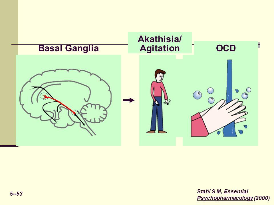 5--53 Stahl S M, Essential Psychopharmacology (2000) Basal Ganglia OCD Akathisia/ Agitation