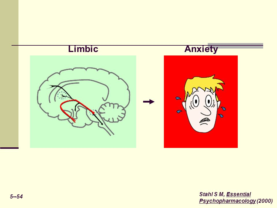 5--54 Stahl S M, Essential Psychopharmacology (2000) LimbicAnxiety