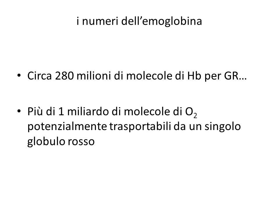 i numeri dellemoglobina Circa 280 milioni di molecole di Hb per GR… Più di 1 miliardo di molecole di O 2 potenzialmente trasportabili da un singolo gl