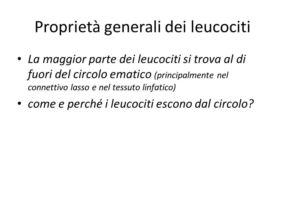 Proprietà generali dei leucociti La maggior parte dei leucociti si trova al di fuori del circolo ematico (principalmente nel connettivo lasso e nel te